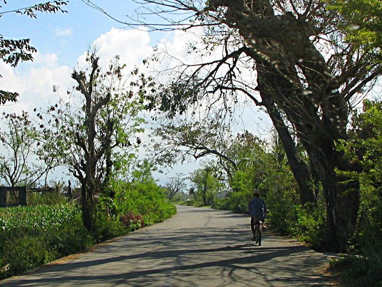 Barangay road and rice fields