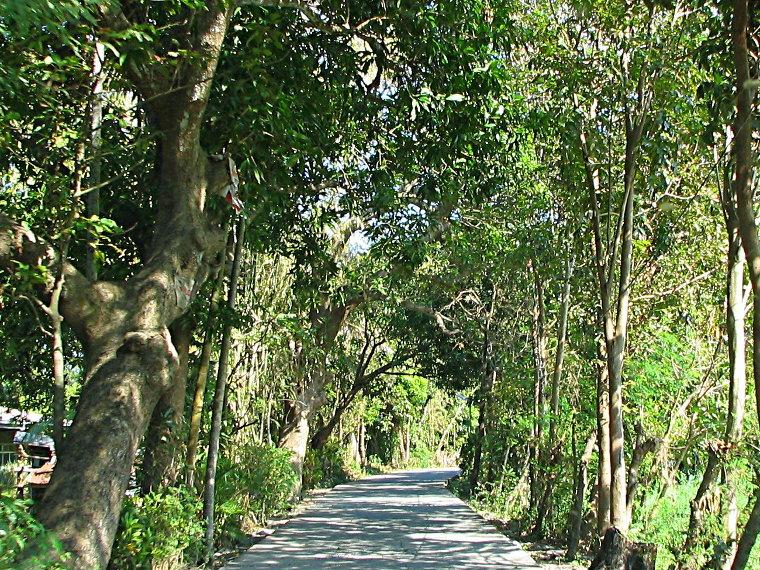 Barangay forest