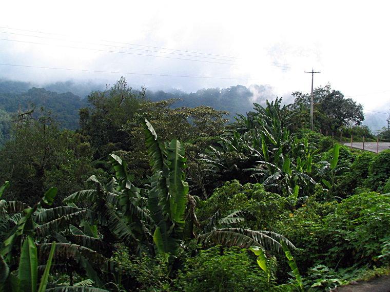 Mountains heading for Baguio VI