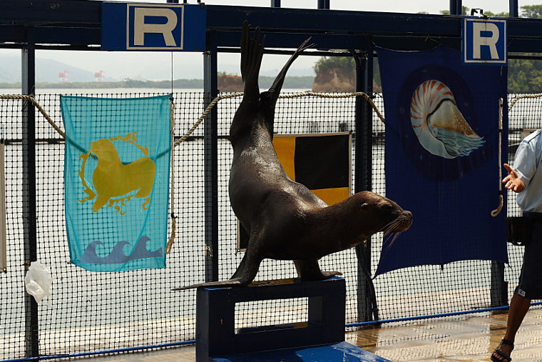 Sea Lion at Ocean Adventure