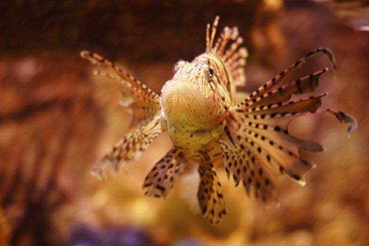 A Nice Fish