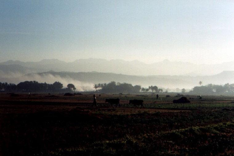 Early morning rice fields in Luna
