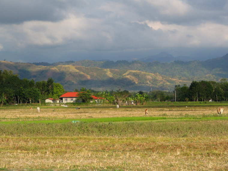 Rice fields and hills