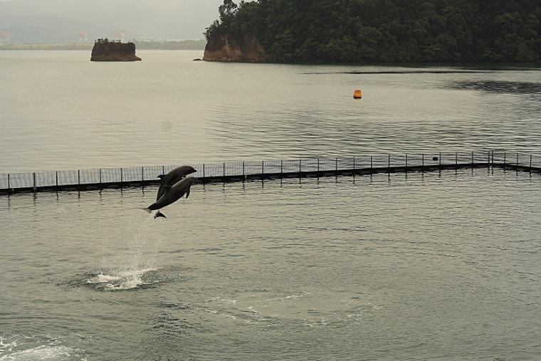 Dolphin Show at Ocean Adventure