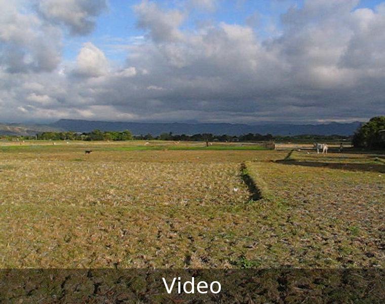 Fields in Luna, La Union