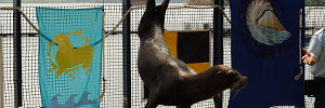 Sea Lion at Ocean Adventure