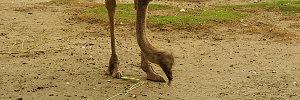 Baluarte Zoo