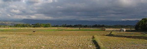 Fields in Luna, La Union